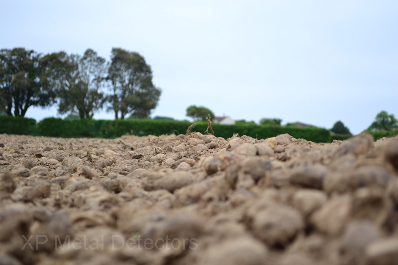Jersey potatoe field